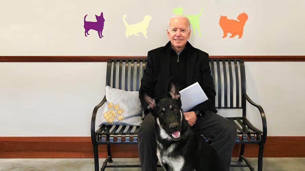 Instagram / Delaware Humane Association